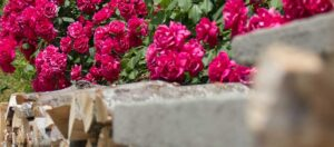 röda rosor och bruna vedträn