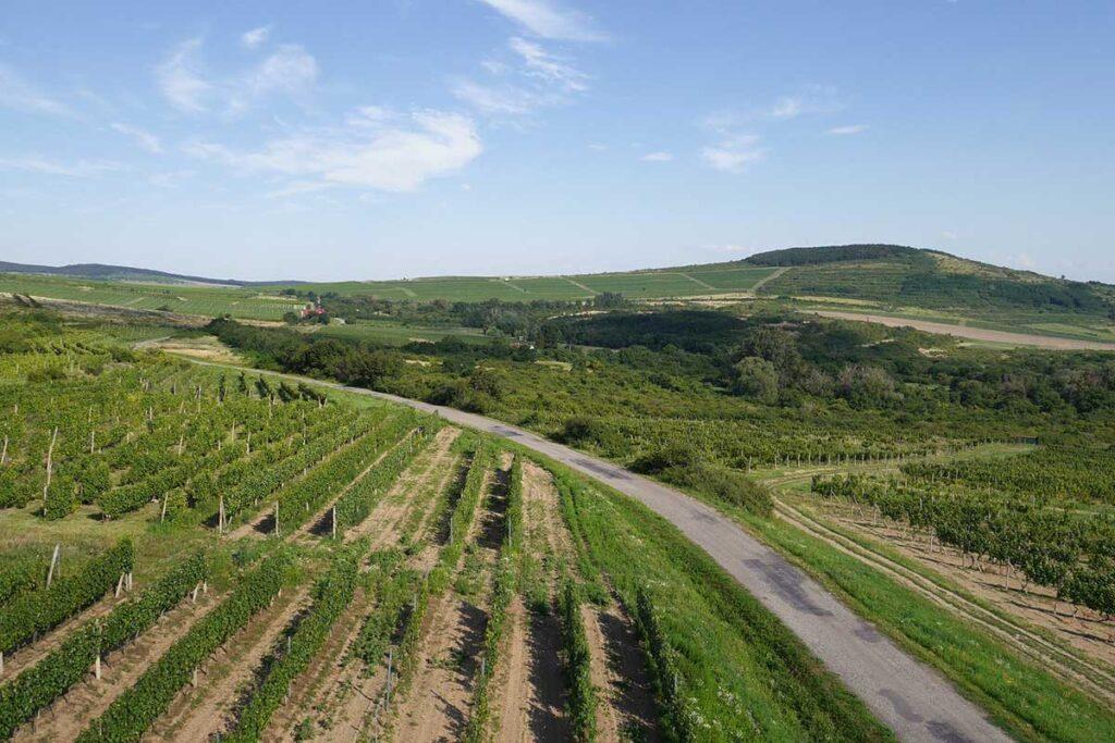landskap med vinodlingar