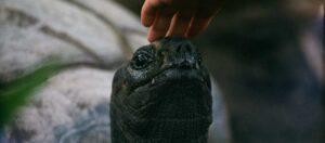 person klappar en sköldpadda på huvudet