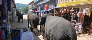 elefanter som tågar på en marknadsgata