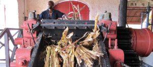 Sockerrör i stor maskin som används vid romtillverkning.