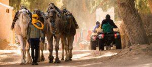 kameler, kamelförare och fyrhjuliga motorcyklar