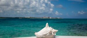 stor vit snäcka med havet i bakgrunden