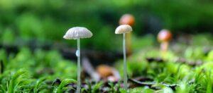 svampar och mossa på marken i skogen
