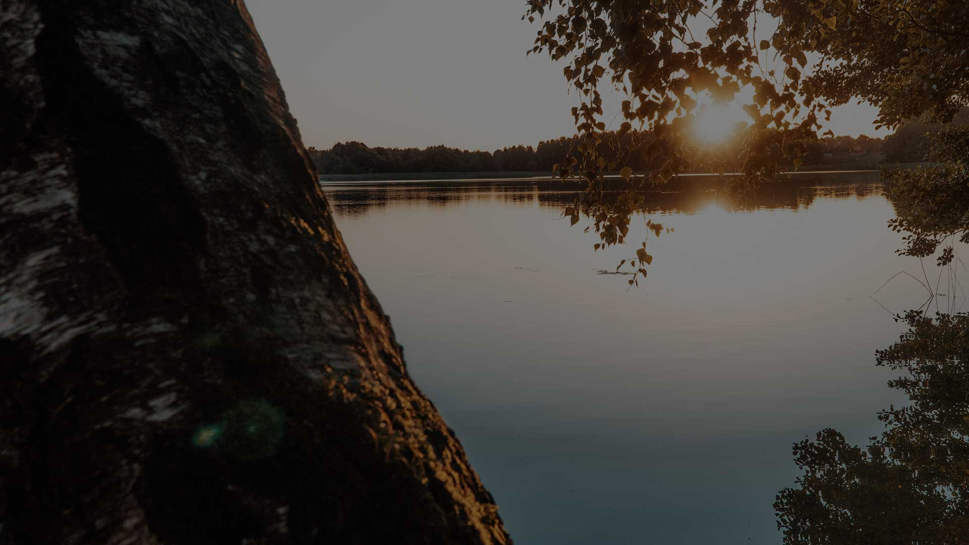 björkstam framför en sjö i solnedgången