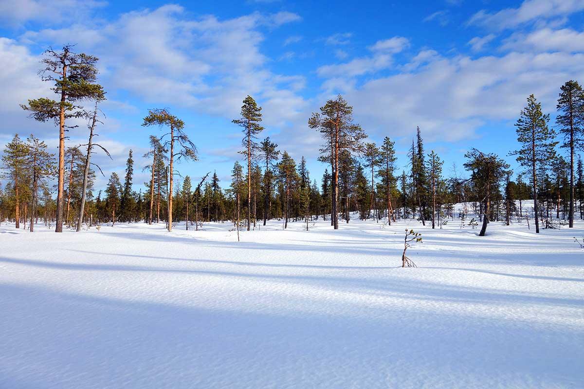 träd och snö