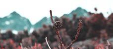 kotte på en gren med berg i bakgrunden